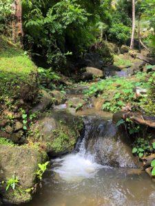 Little stream in garden