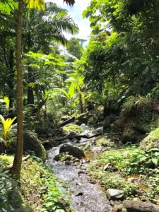 Garden with little stream